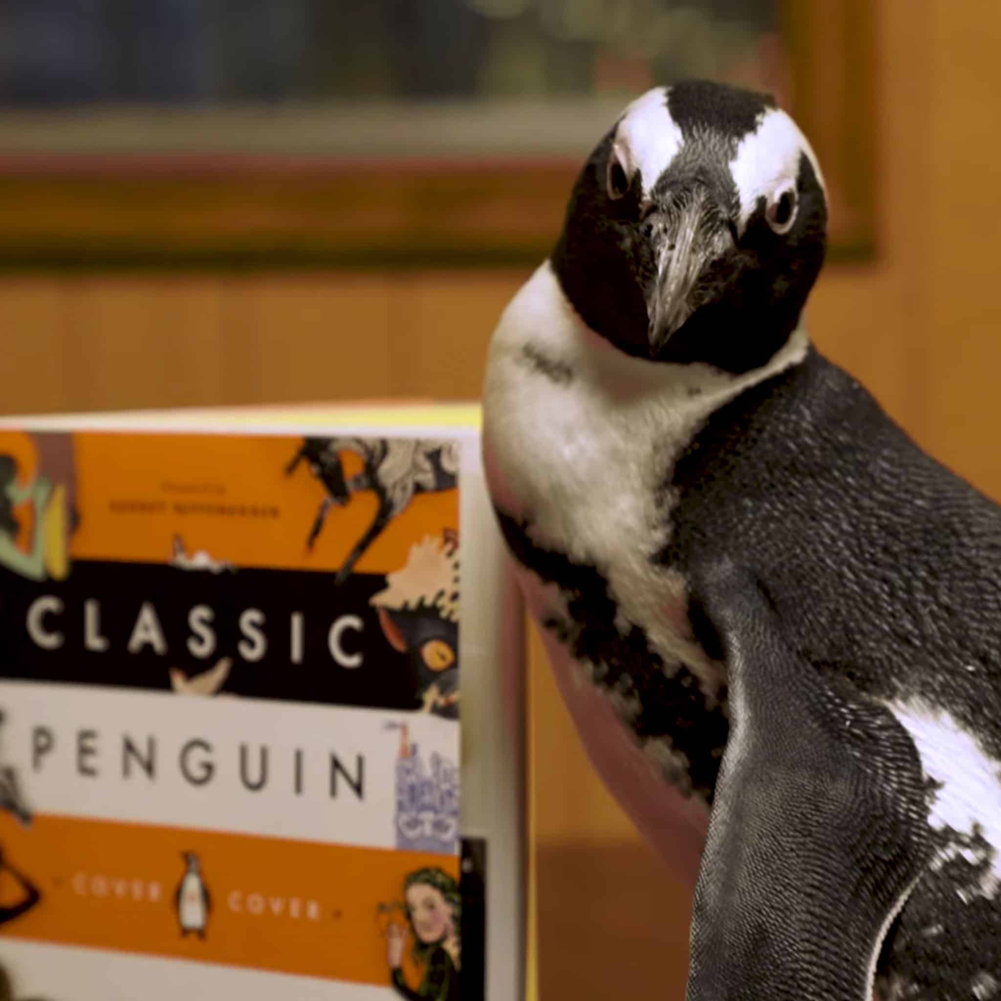 """A Real Penguin's """"Internship"""" at Our Book Distribution Center"""